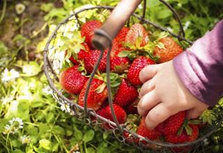 ph_strawberry